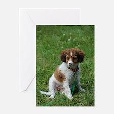 kooikerhondje puppy wet Greeting Cards