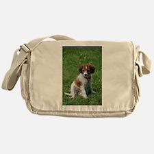 kooikerhondje puppy wet Messenger Bag