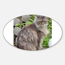 maine coon sitting 2 Decal