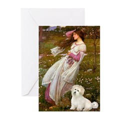 Windflowers / Coton Greeting Cards (Pk of 20)