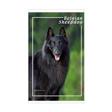 Belgian Sheepdog-1 Rectangle Decal