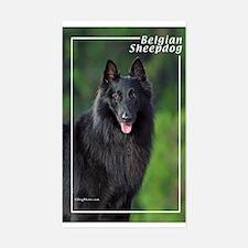 Belgian Sheepdog-1 Rectangle Decal