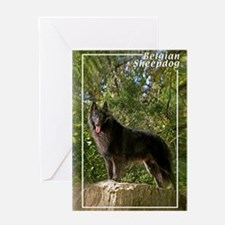 Belgian Sheepdog-2 Greeting Card