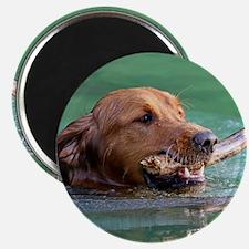 Happy Retriever Dog Magnet