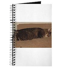 manx sleeping Journal