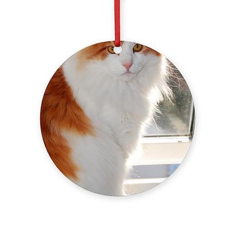 norwegian forest cat orange white sitting 4 Round by ...
