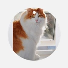 norwegian forest cat orange white sitting 4 Round