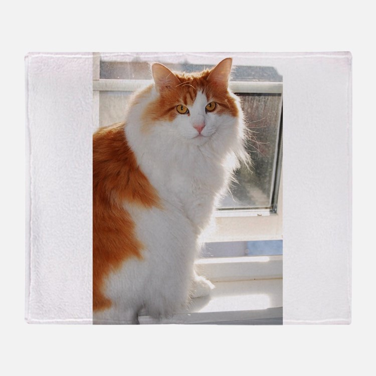 norwegian forest cat orange white sitting 4 Throw
