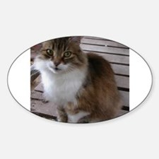 norwegian forest cat brown orange white tabby sitt