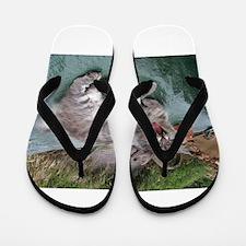 norwegian forest cat grey tabby yawning Flip Flops
