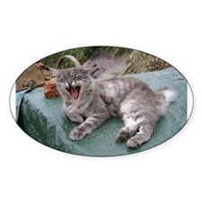 norwegian forest cat grey tabby yawning Decal