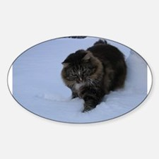norwegian forest cat brwon tabby in snow Decal