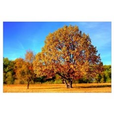 Fall Autumn Tree Poster