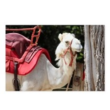 Cute Camels Postcards (Package of 8)