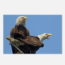 Eagle Parents Postcards (Package of 8)