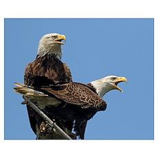 Eagle Parents Poster