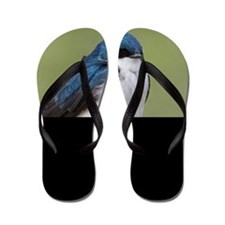 Tree Swallow Flip Flops