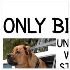 ONLY BIKERS UNDERSTAND WHY DOGS STICK THEIR HEADS  Poster