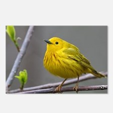 Yellow Warbler Postcards (Package of 8)