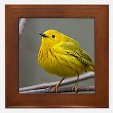 Yellow Warbler Framed Tile