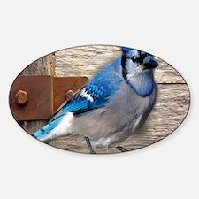 rustic barn wood blue jay Decal