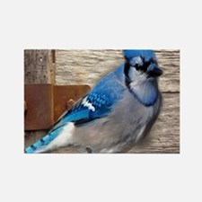 rustic barn wood blue jay Magnets
