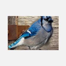 rustic barn wood blue jay Magnets