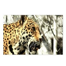 nature wild safari leopar Postcards (Package of 8)