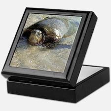 Giant Sea Turtle Keepsake Gift Box