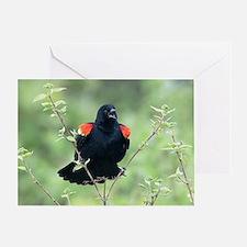 Red-Winged Blackbird Greeting Card