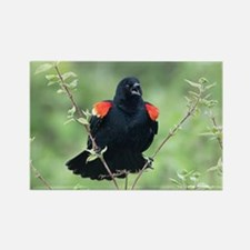 Red-Winged Blackbird Rectangle Magnet
