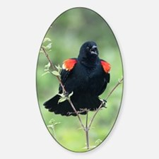 Red-Winged Blackbird Decal