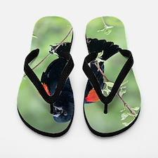 Red-Winged Blackbird Flip Flops