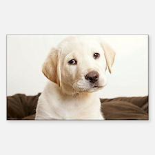 Cute Golden Retriever Puppy Decal