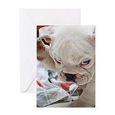 Funny English Bulldog Puppy Greeting Cards