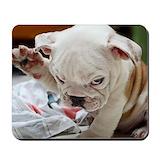 Bulldog puppy Classic Mousepad