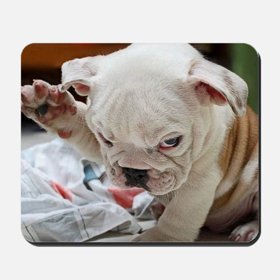 Funny English Bulldog Puppy Mousepad