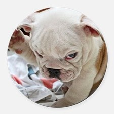Funny English Bulldog Puppy Round Car Magnet