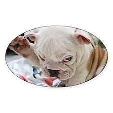 Funny English Bulldog Puppy Decal