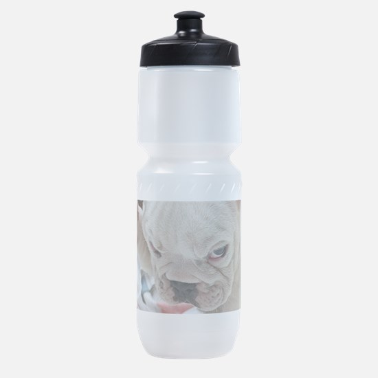 Funny English Bulldog Puppy Sports Bottle