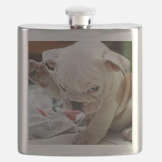 Funny English Bulldog Puppy Flask