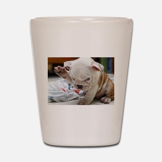 Funny English Bulldog Puppy Shot Glass