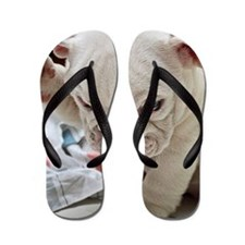 Funny English Bulldog Puppy Flip Flops