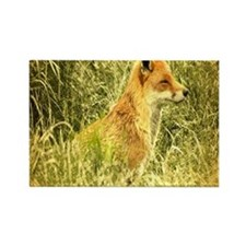 nature wildlife red fox Magnets