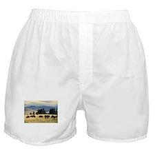 National Parks Bison Herd Boxer Shorts