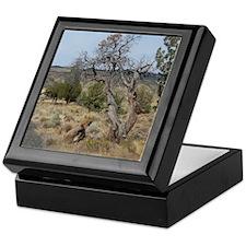 Oregon Landscape Keepsake Box