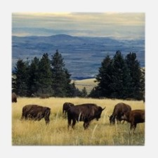 National Parks Bison Herd Tile Coaster