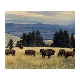 American bison Blankets