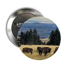 "National Parks Bison Herd 2.25"" Button (10 pack)"