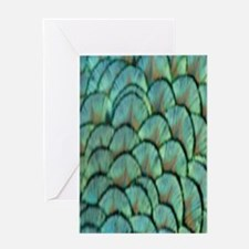 Peafowl Feathers Greeting Cards
